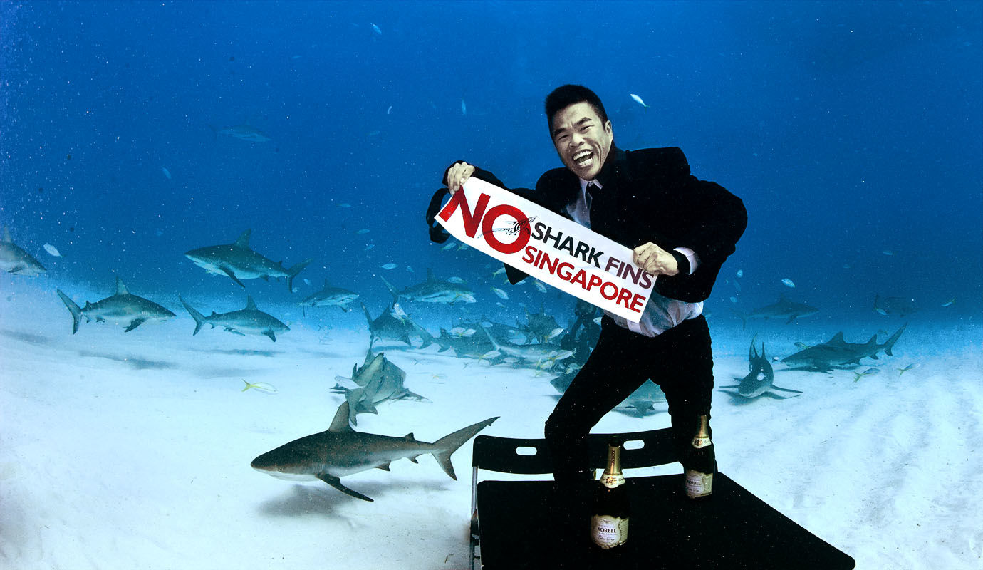 News: SIA stops carriage of shark fins